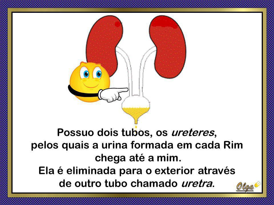 Possuo dois tubos, os ureteres, pelos quais a urina formada em cada Rim chega até a mim.