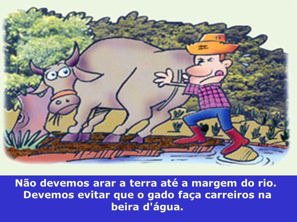 Não devemos arar a terra até a margem do rio. Devemos evitar que o gado faça carreiros na beira d'água.