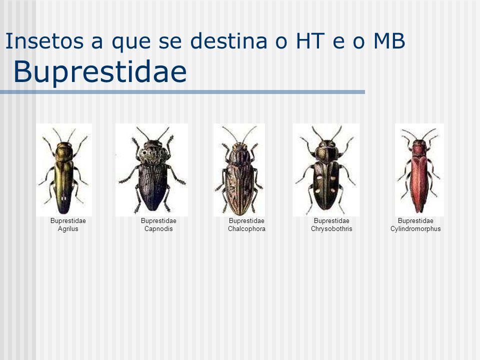Buprestidae Agrilus Buprestidae Capnodis Buprestidae Chalcophora Buprestidae Chrysobothris Buprestidae Cylindromorphus Insetos a que se destina o HT e