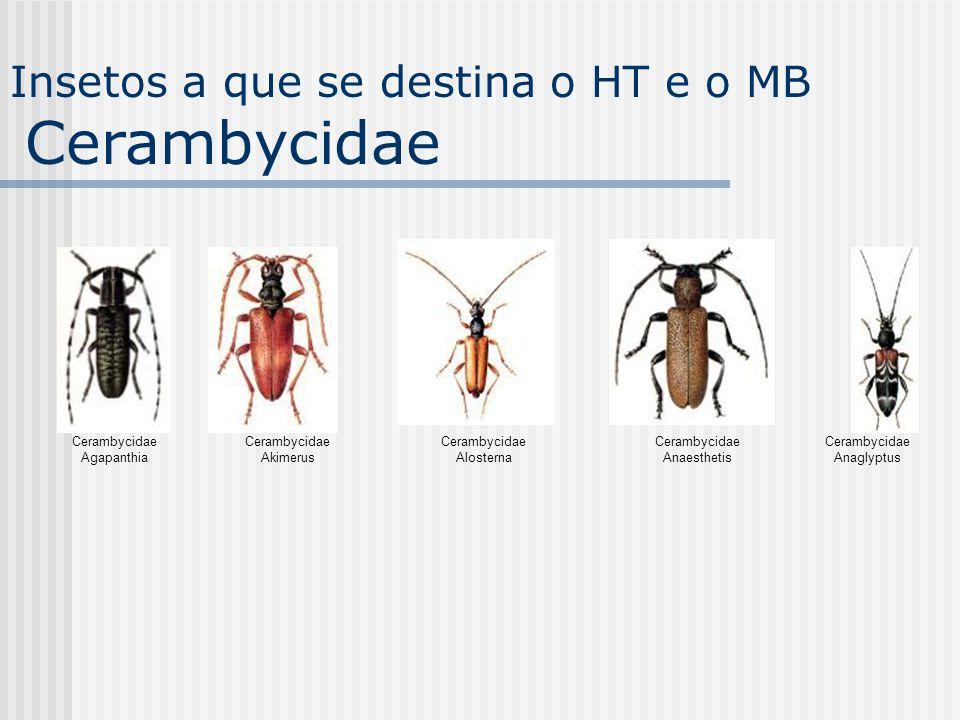 Cerambycidae Agapanthia Cerambycidae Akimerus Cerambycidae Alosterna Cerambycidae Anaesthetis Cerambycidae Anaglyptus Insetos a que se destina o HT e