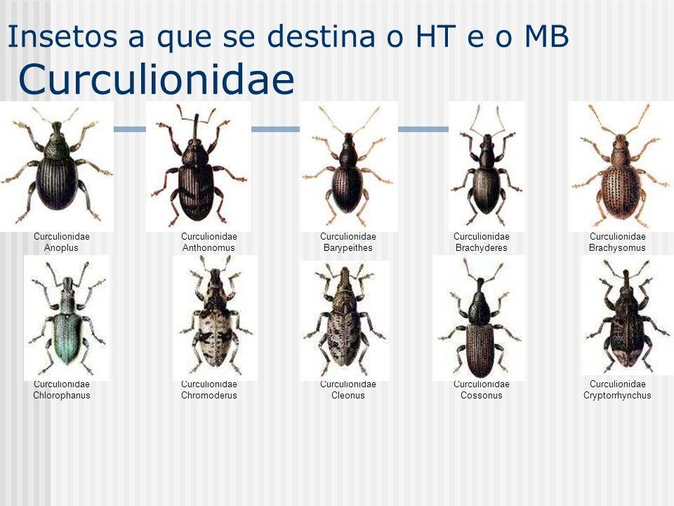 Curculionidae Anoplus Curculionidae Anthonomus Curculionidae Barypeithes Curculionidae Brachyderes Curculionidae Brachysomus Curculionidae Chlorophanu