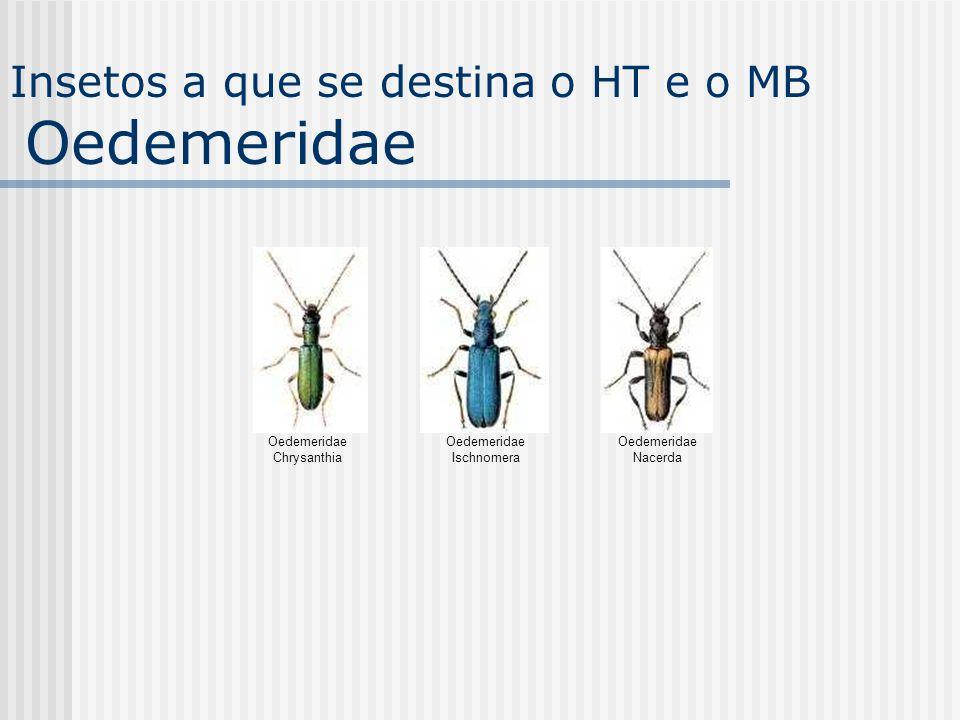 Oedemeridae Chrysanthia Oedemeridae Ischnomera Oedemeridae Nacerda Insetos a que se destina o HT e o MB Oedemeridae