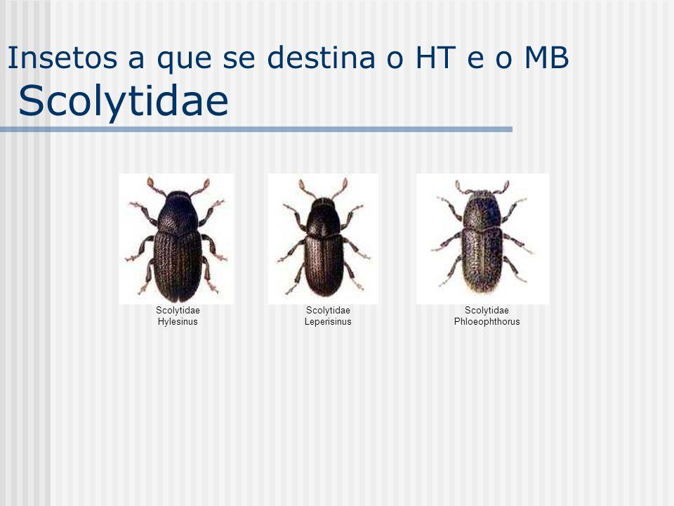 Scolytidae Hylesinus Scolytidae Leperisinus Scolytidae Phloeophthorus Insetos a que se destina o HT e o MB Scolytidae