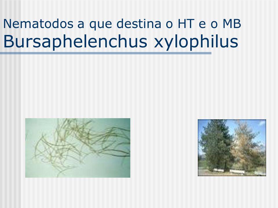 Nematodos a que destina o HT e o MB Bursaphelenchus xylophilus