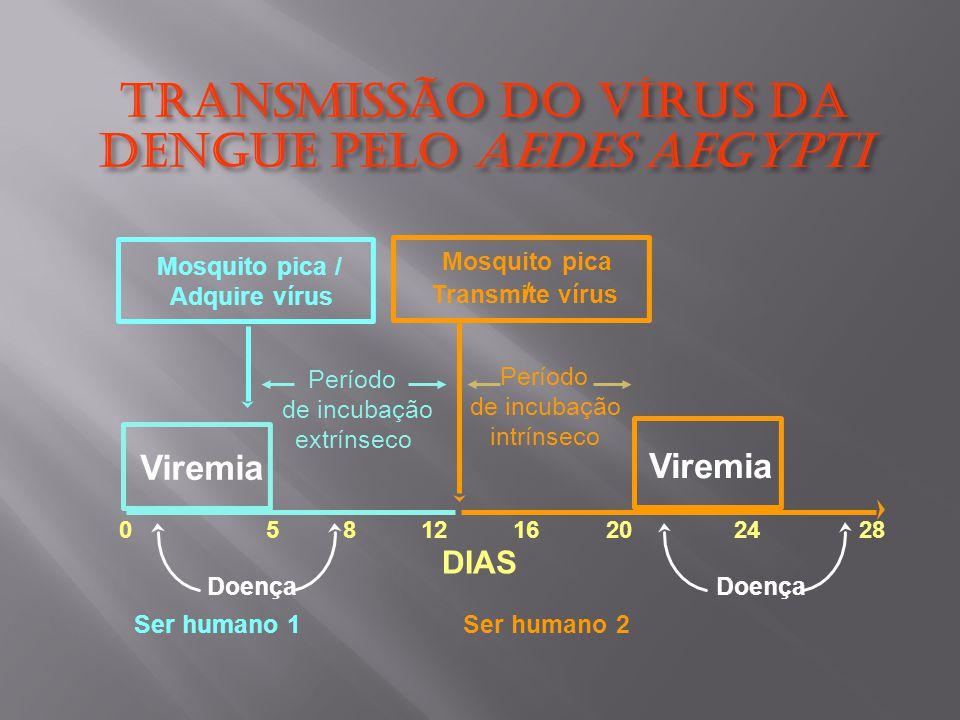 Transmissão do Vírus dA Dengue pelo Aedes aegypti Viremia Período de incubação extrínseco DIAS 0581216202428 Ser humano 1Ser humano 2 Mosquito pica / Adquire vírus Mosquito pica / Transmite vírus Período de incubação intrínseco Doença