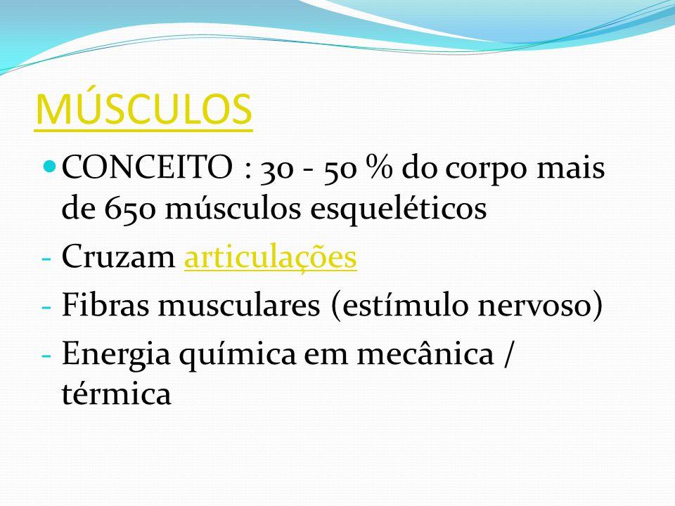 MÚSCULOS CONCEITO : 30 - 50 % do corpo mais de 650 músculos esqueléticos - Cruzam articulaçõesarticulações - Fibras musculares (estímulo nervoso) - En