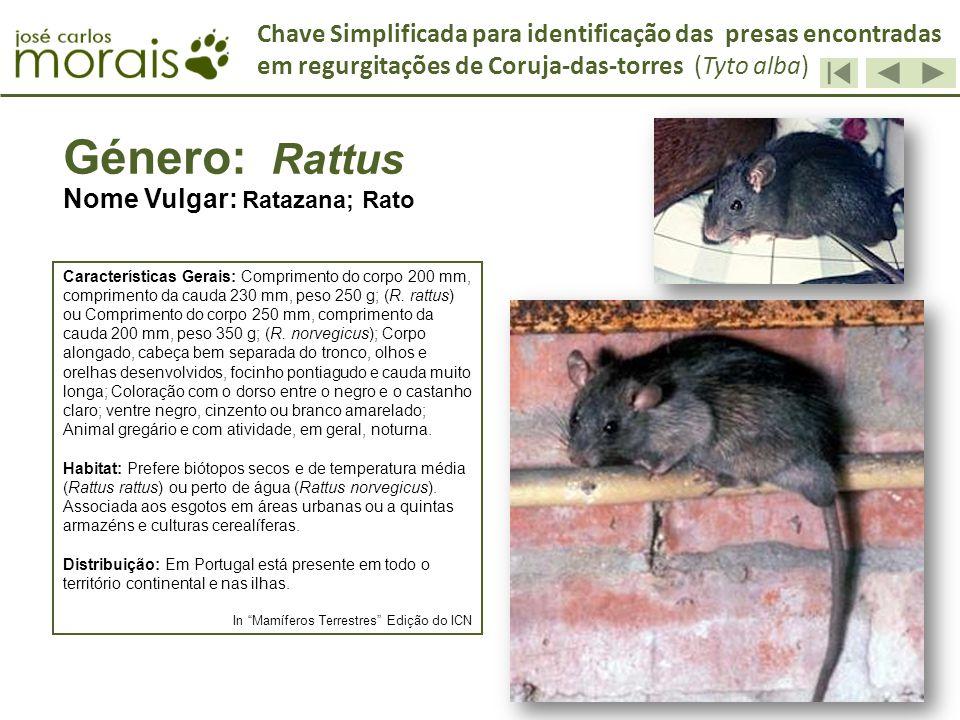 Género: Rattus Nome Vulgar: Ratazana; Rato Características Gerais: Comprimento do corpo 200 mm, comprimento da cauda 230 mm, peso 250 g; (R. rattus) o