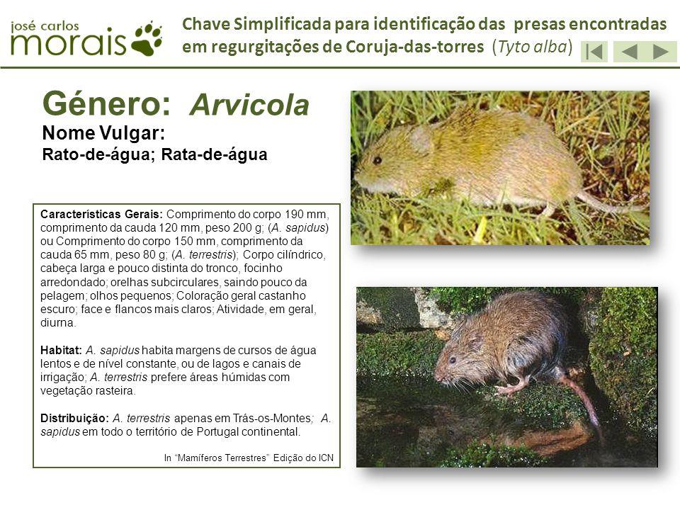 Género: Arvicola Nome Vulgar: Rato-de-água; Rata-de-água Características Gerais: Comprimento do corpo 190 mm, comprimento da cauda 120 mm, peso 200 g;