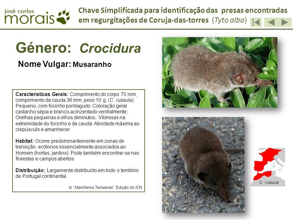 Género: Crocidura Nome Vulgar: Musaranho Características Gerais: Comprimento do corpo 70 mm, comprimento da cauda 38 mm, peso 10 g; (C. russula); Pequ