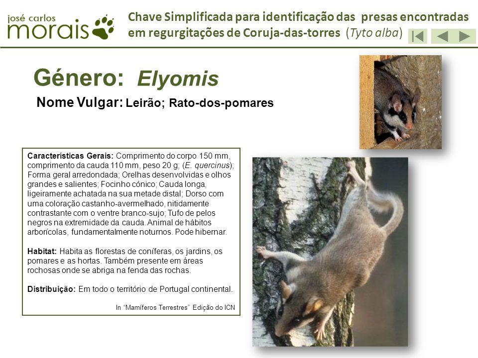 Género: Elyomis Nome Vulgar: Leirão; Rato-dos-pomares Características Gerais: Comprimento do corpo 150 mm, comprimento da cauda 110 mm, peso 20 g; (E.