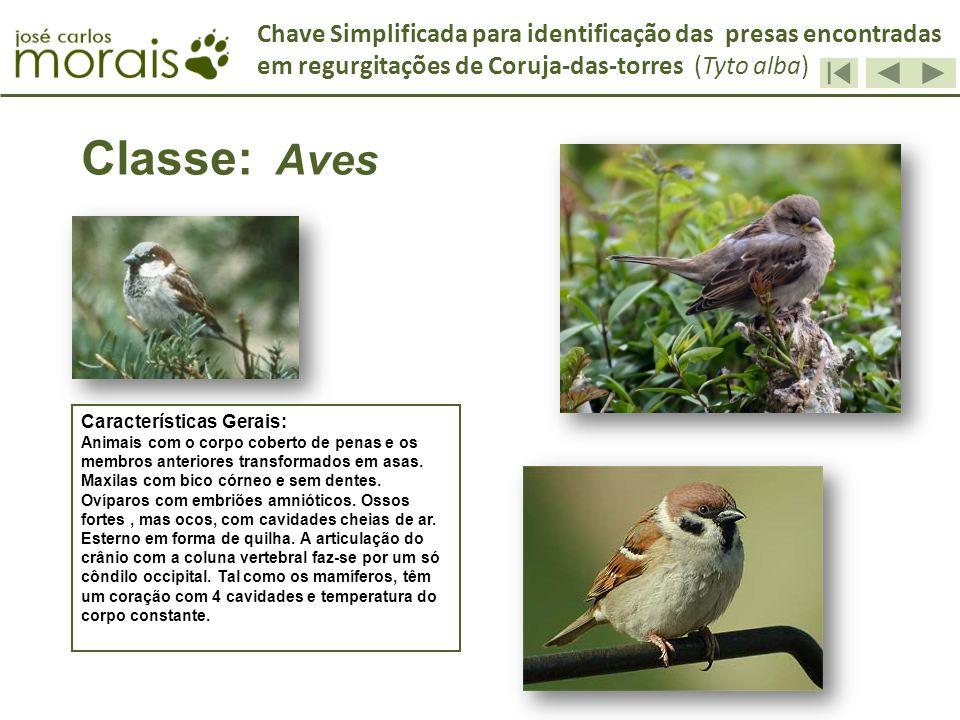 Classe: Aves Características Gerais: Animais com o corpo coberto de penas e os membros anteriores transformados em asas. Maxilas com bico córneo e sem