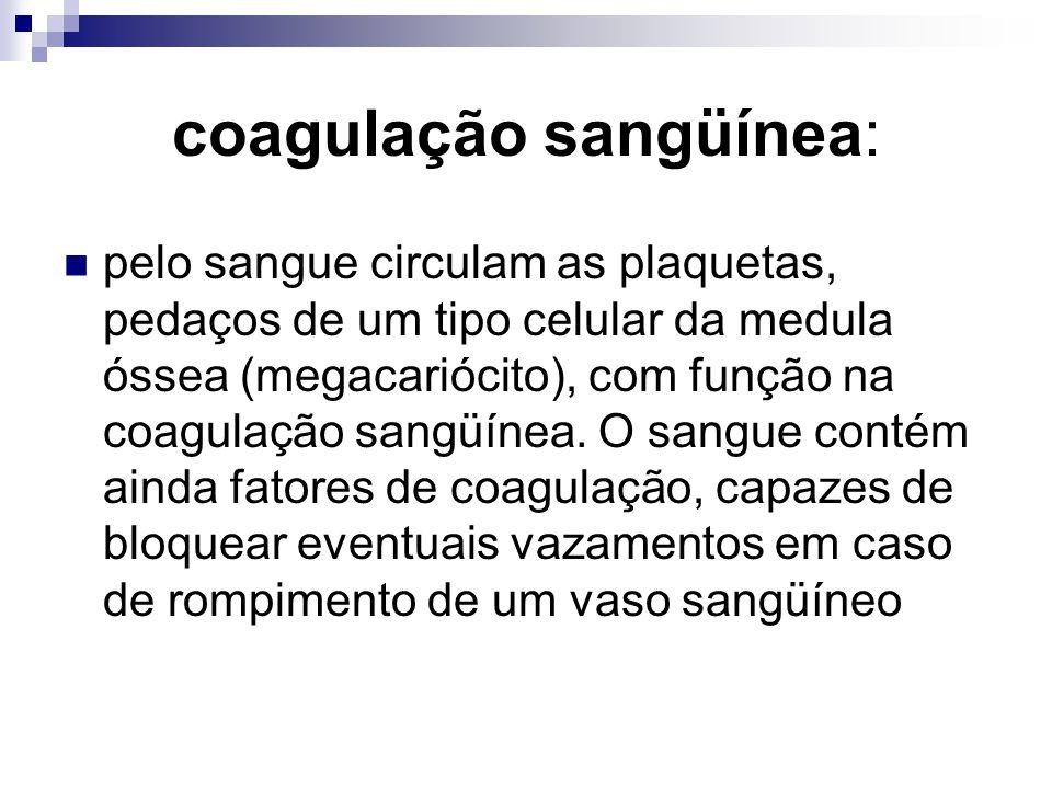 coagulação sangüínea: pelo sangue circulam as plaquetas, pedaços de um tipo celular da medula óssea (megacariócito), com função na coagulação sangüíne