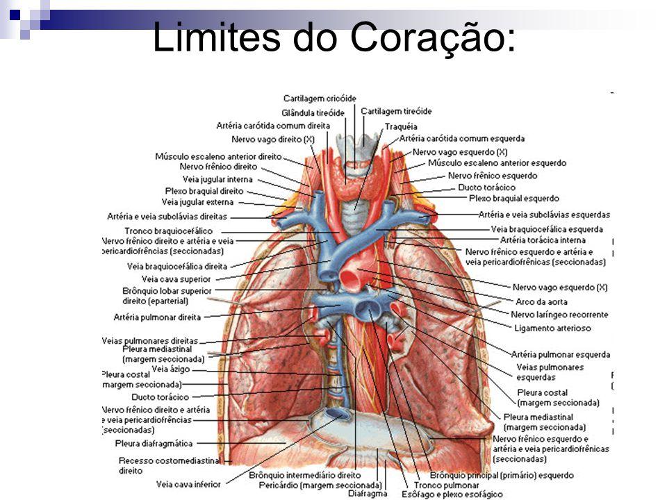 Limites do Coração: