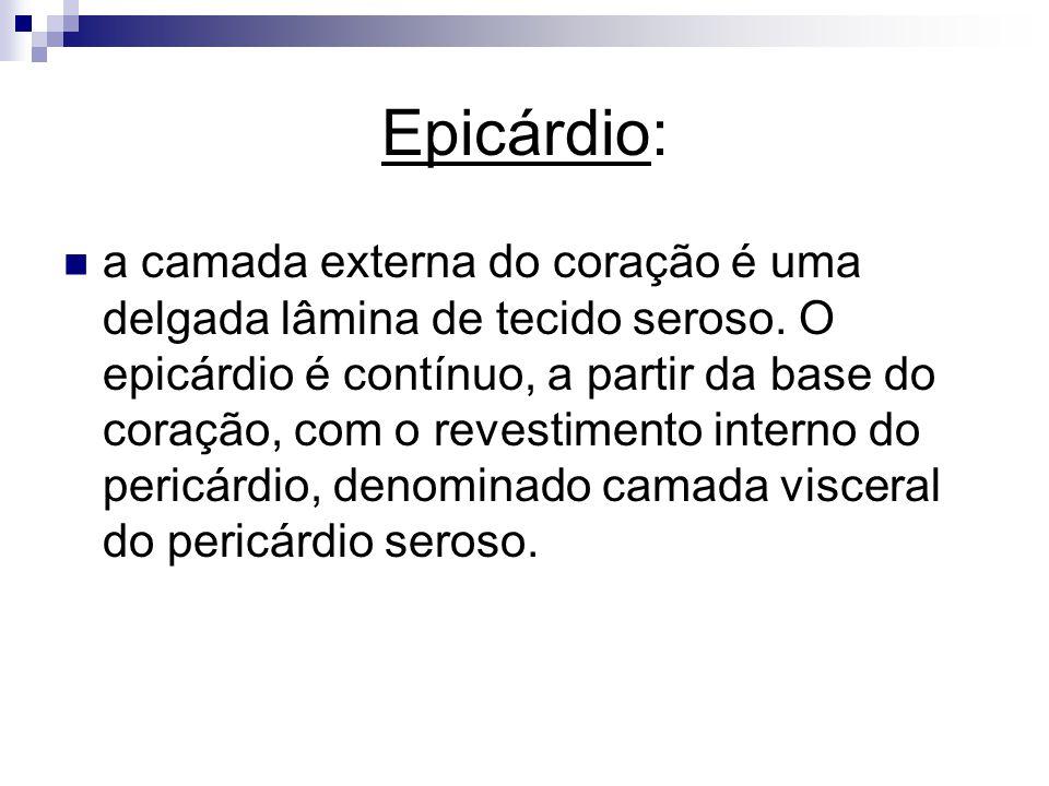 Epicárdio: a camada externa do coração é uma delgada lâmina de tecido seroso. O epicárdio é contínuo, a partir da base do coração, com o revestimento
