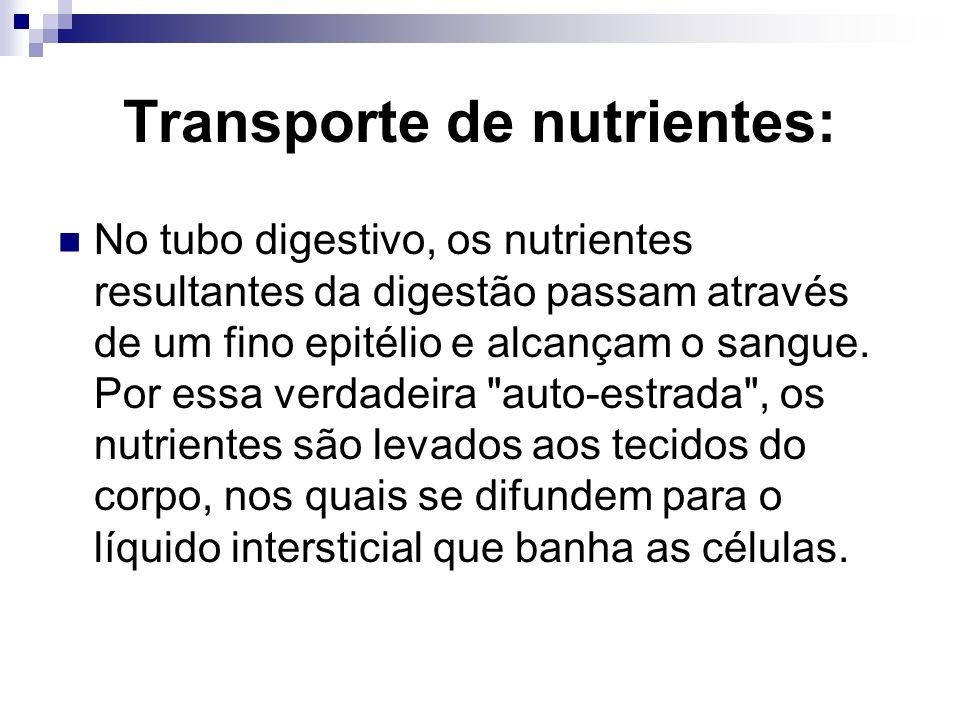 Transporte de nutrientes: No tubo digestivo, os nutrientes resultantes da digestão passam através de um fino epitélio e alcançam o sangue. Por essa ve