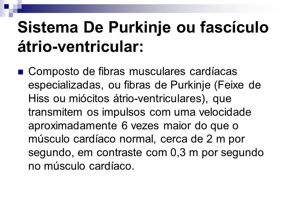 Sistema De Purkinje ou fascículo átrio-ventricular: Composto de fibras musculares cardíacas especializadas, ou fibras de Purkinje (Feixe de Hiss ou mi