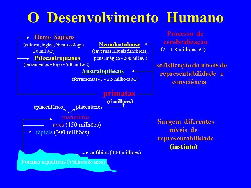 O Desenvolvimento Humano Formas aquáticas ( 4 bilhões de anos) anfíbios (400 milhões) mamíferos aves (150 milhões) répteis (300 milhões) aplacentários