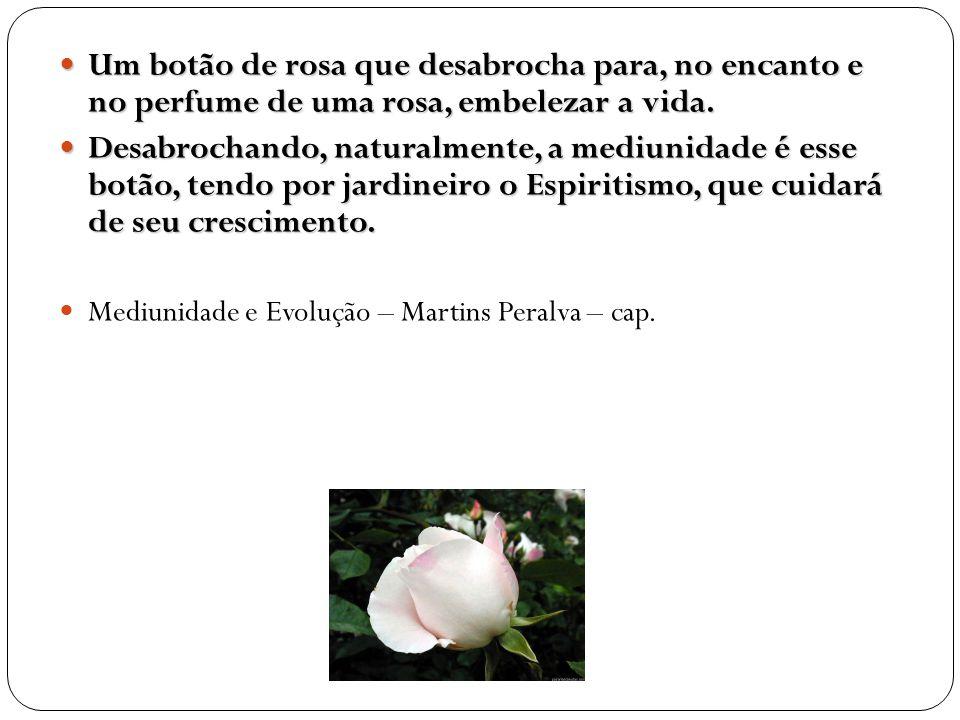 Um botão de rosa que desabrocha para, no encanto e no perfume de uma rosa, embelezar a vida. Um botão de rosa que desabrocha para, no encanto e no per