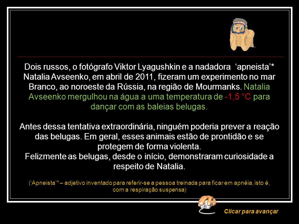 ABRIL 2011 A SEREIA E AS BELUGAS