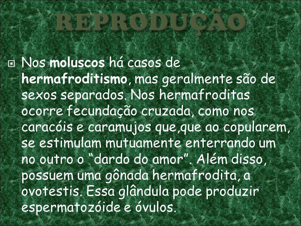 Nos moluscos há casos de hermafroditismo, mas geralmente são de sexos separados.