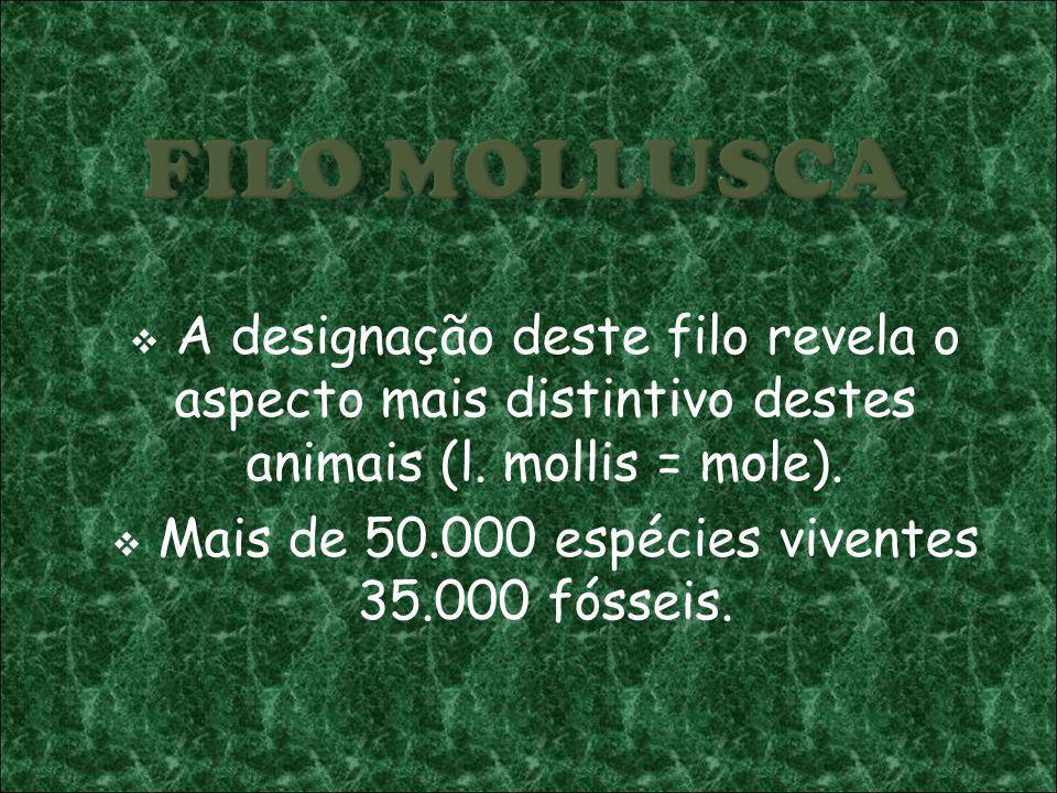A designação deste filo revela o aspecto mais distintivo destes animais (l. mollis = mole). Mais de 50.000 espécies viventes 35.000 fósseis.
