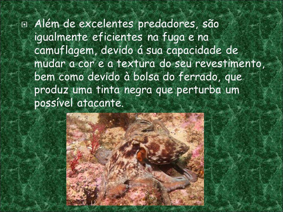 Além de excelentes predadores, são igualmente eficientes na fuga e na camuflagem, devido á sua capacidade de mudar a cor e a textura do seu revestimen