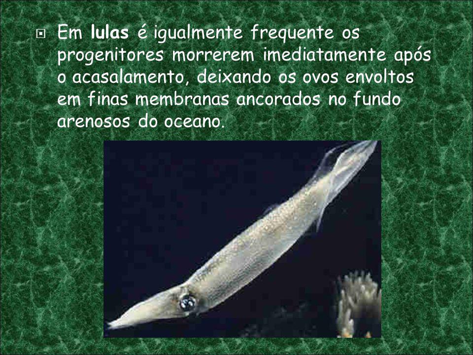 Em lulas é igualmente frequente os progenitores morrerem imediatamente após o acasalamento, deixando os ovos envoltos em finas membranas ancorados no fundo arenosos do oceano.