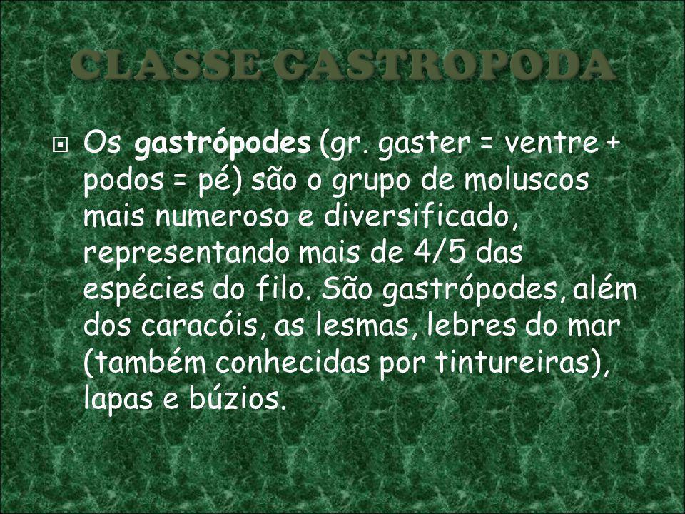 Os gastrópodes (gr. gaster = ventre + podos = pé) são o grupo de moluscos mais numeroso e diversificado, representando mais de 4/5 das espécies do fil