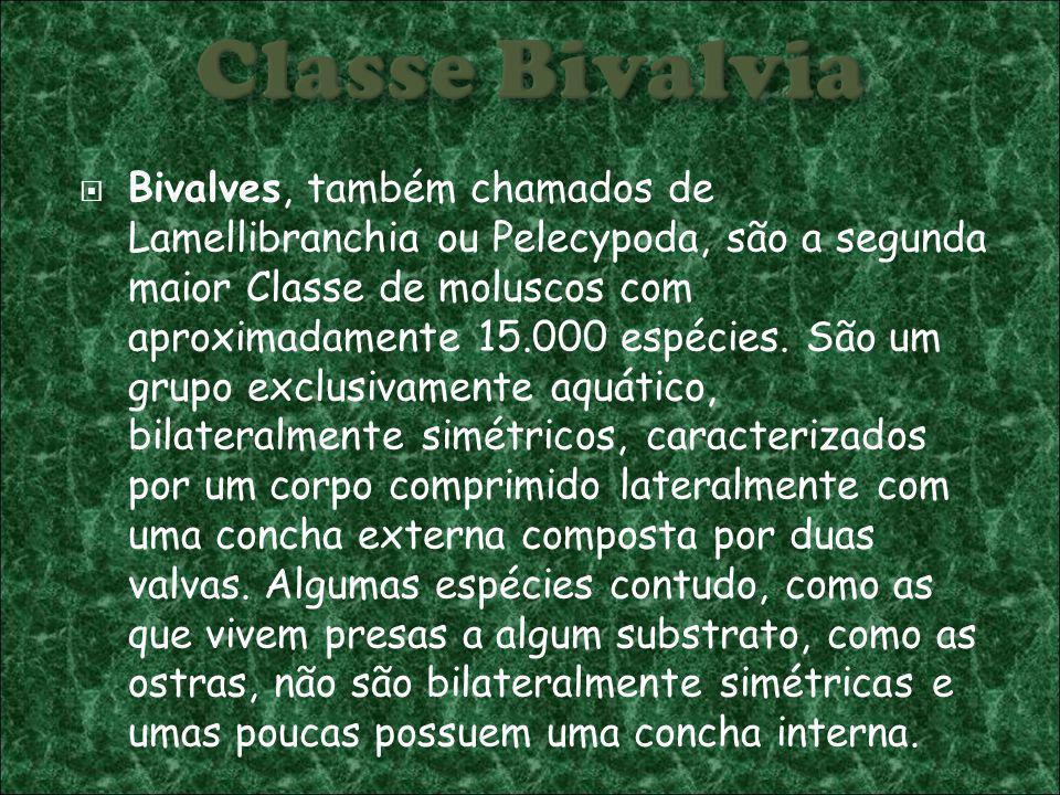 Bivalves, também chamados de Lamellibranchia ou Pelecypoda, são a segunda maior Classe de moluscos com aproximadamente 15.000 espécies.