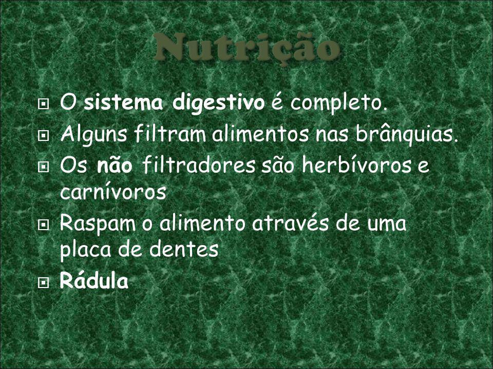 O sistema digestivo é completo. Alguns filtram alimentos nas brânquias. Os não filtradores são herbívoros e carnívoros Raspam o alimento através de um