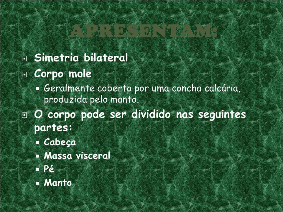 Simetria bilateral Corpo mole Geralmente coberto por uma concha calcária, produzida pelo manto. O corpo pode ser dividido nas seguintes partes: Cabeça