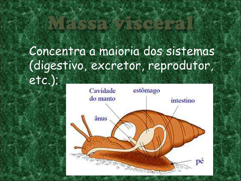 Concentra a maioria dos sistemas (digestivo, excretor, reprodutor, etc.);
