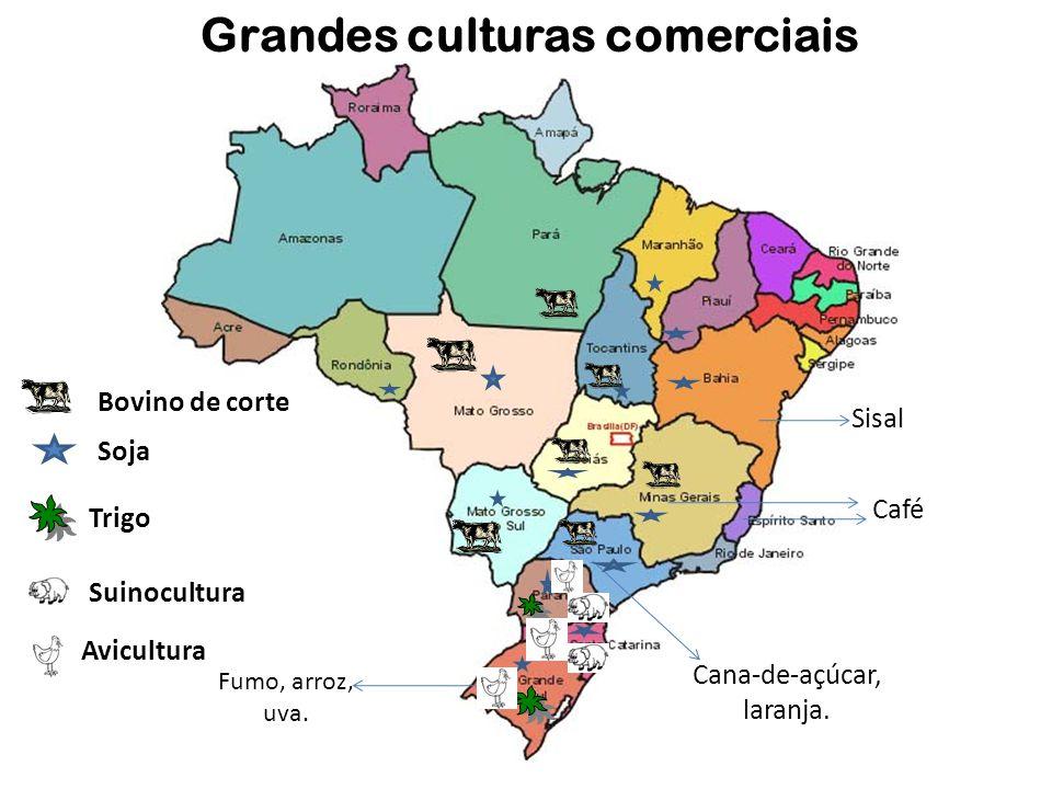 Grandes culturas comerciais Cana-de-açúcar, laranja. Fumo, arroz, uva. Café Soja Trigo Sisal Suinocultura Avicultura Bovino de corte