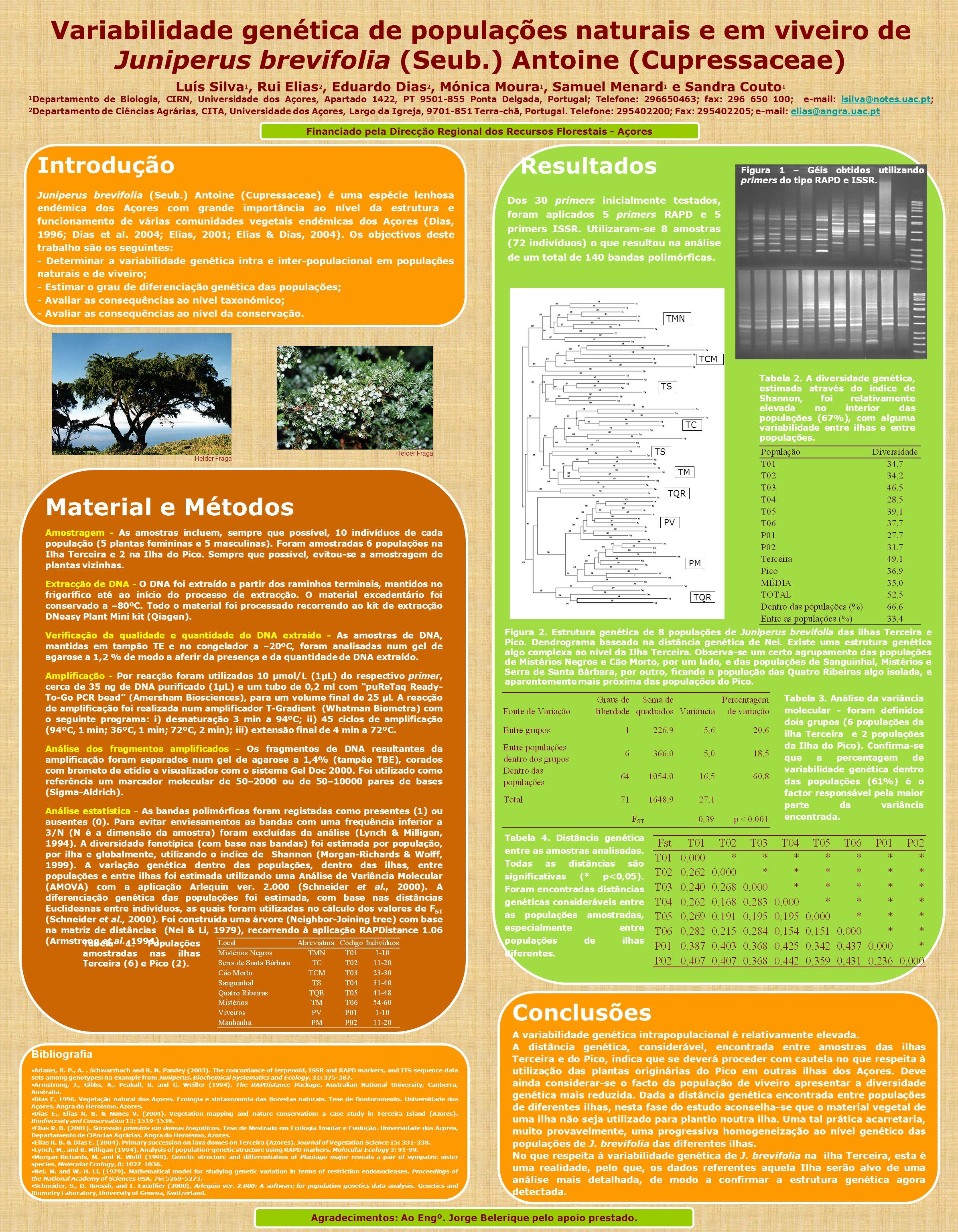 Introdução Juniperus brevifolia (Seub.) Antoine (Cupressaceae) é uma espécie lenhosa endémica dos Açores com grande importância ao nível da estrutura