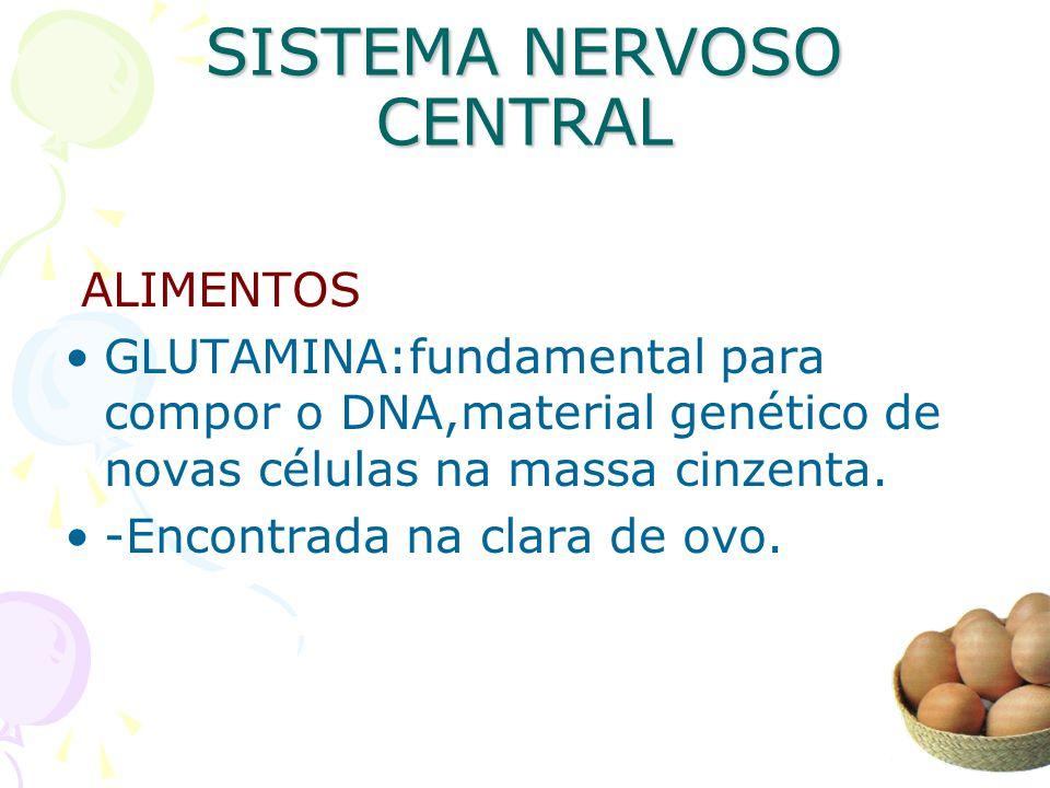 SISTEMA NERVOSO CENTRAL ALIMENTOS GLUTAMINA:fundamental para compor o DNA,material genético de novas células na massa cinzenta. -Encontrada na clara d