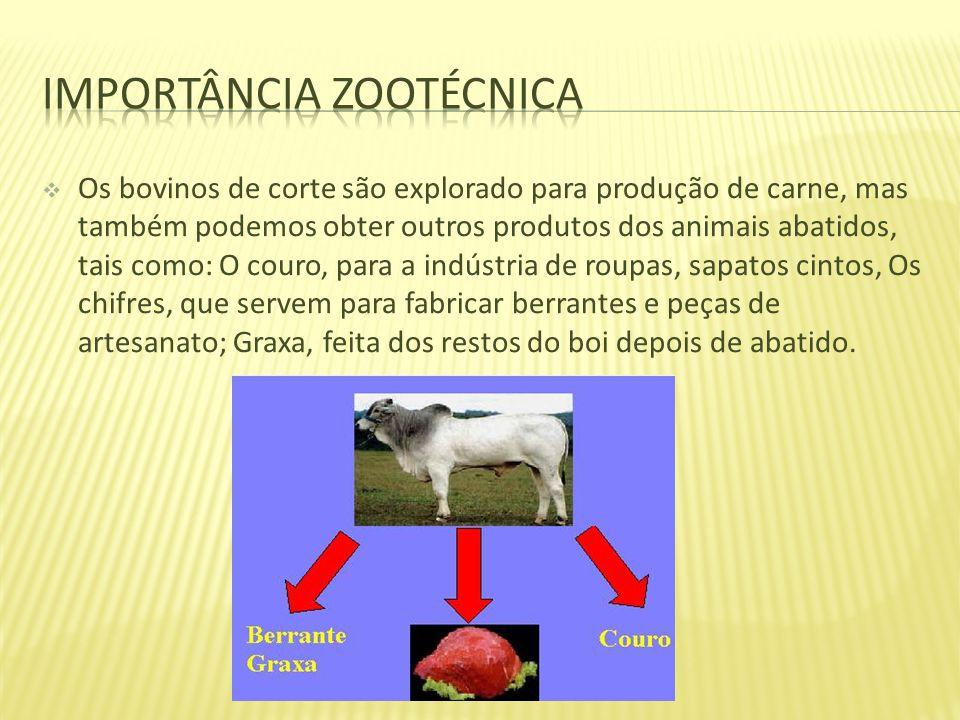 Os bovinos de corte são explorado para produção de carne, mas também podemos obter outros produtos dos animais abatidos, tais como: O couro, para a in