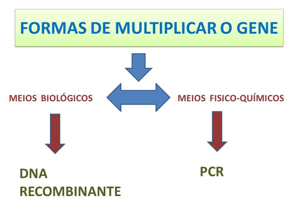 FORMAS DE MULTIPLICAR O GENE MEIOS BIOLÓGICOSMEIOS FISICO-QUÍMICOS DNA RECOMBINANTE PCR