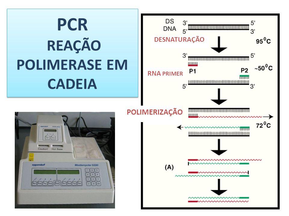 PCR REAÇÃO POLIMERASE EM CADEIA DESNATURAÇÃO RNA PRIMER POLIMERIZAÇÃO