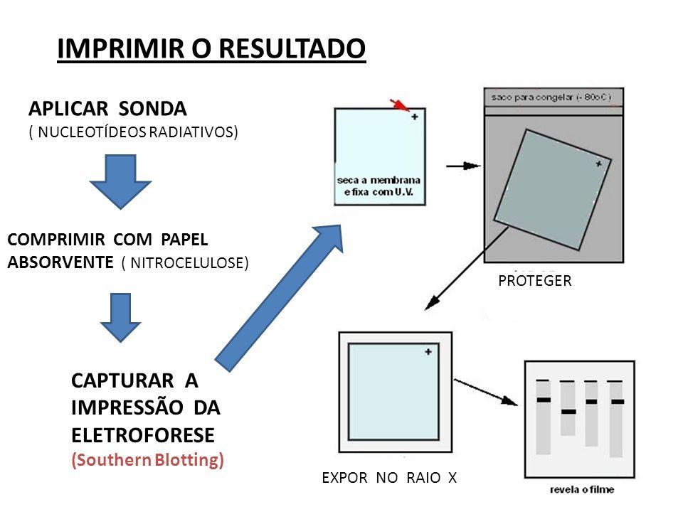 IMPRIMIR O RESULTADO COMPRIMIR COM PAPEL ABSORVENTE ( NITROCELULOSE) CAPTURAR A IMPRESSÃO DA ELETROFORESE (Southern Blotting) EXPOR NO RAIO X APLICAR