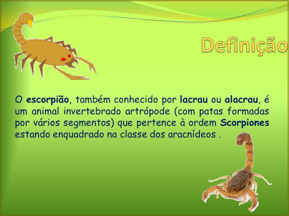 O escorpião, também conhecido por lacrau ou alacrau, é um animal invertebrado artrópode (com patas formadas por vários segmentos) que pertence à ordem Scorpiones estando enquadrado na classe dos aracnídeos.