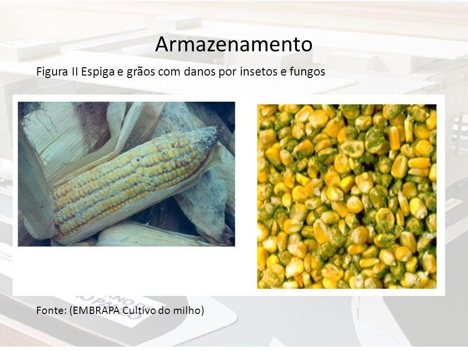 Armazenamento Fonte: (EMBRAPA Cultivo do milho) Figura II Espiga e grãos com danos por insetos e fungos