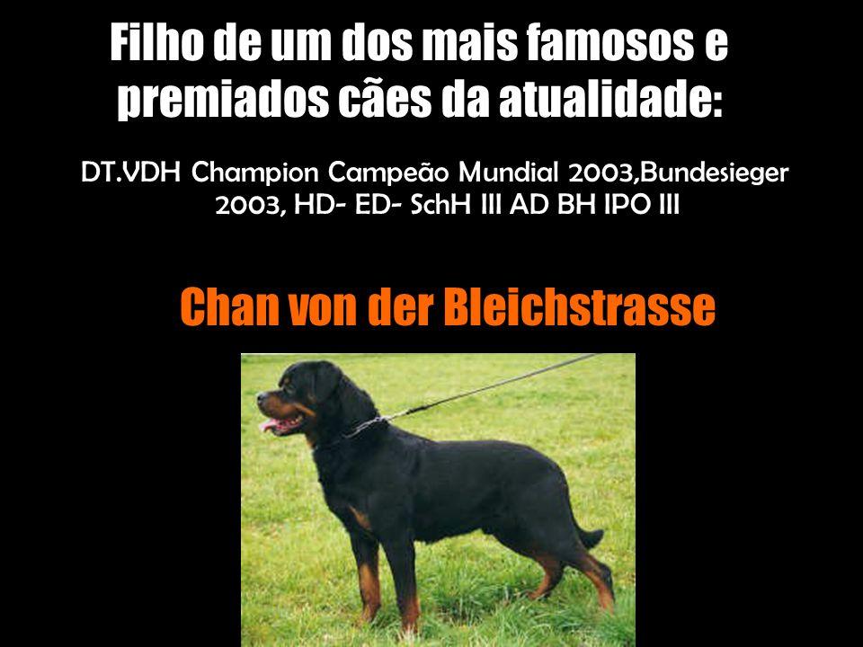 Filho de um dos mais famosos e premiados cães da atualidade: DT.VDH Champion Campeão Mundial 2003,Bundesieger 2003, HD- ED- SchH III AD BH IPO III Chan von der Bleichstrasse