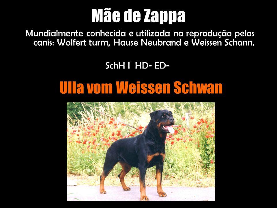 Zappa é neto dos excepcionais reprodutores: Campeão Internacional, Austríaco, de Luxembugo, Suiço Campeão Mundial Jovem 94 Campeão Jovem Bundesieger 94 Klubsieger Austríaco 95,96,97 Klubsieger Suiço 96 Campeão Europeu 97 HD- ED- SchH IIIAD BH AD IPO III Gekort Bis.