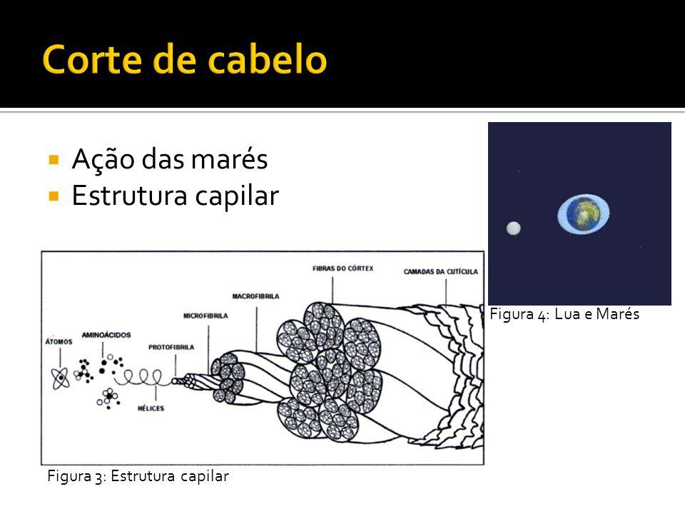 Ação das marés Estrutura capilar Figura 3: Estrutura capilar Figura 4: Lua e Marés