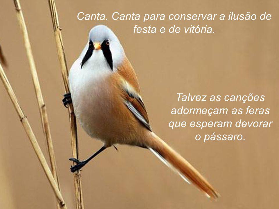 No deslumbramento da ascensão, se pressentires que amanhã estarás mudo, esgota, como um pássaro, as canções que tens na garganta.