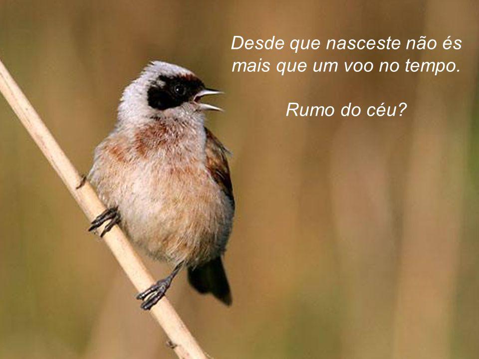 Canta. Canta para conservar a ilusão de festa e de vitória. Talvez as canções adormeçam as feras que esperam devorar o pássaro.