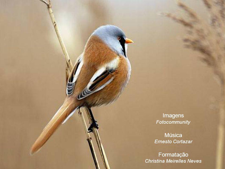 Imagens Fotocommunity Música Ernesto Cortazar Formatação Christina Meirelles Neves