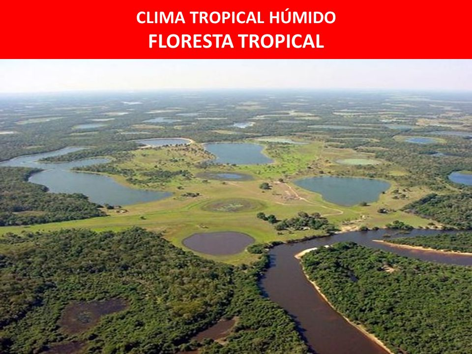 CLIMA TROPICAL HÚMIDO FLORESTA TROPICAL