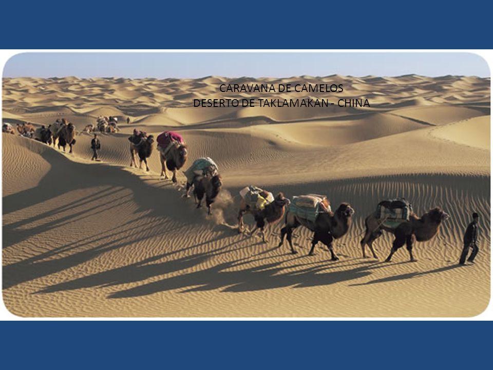 CARAVANA DE CAMELOS DESERTO DE TAKLAMAKAN - CHINA