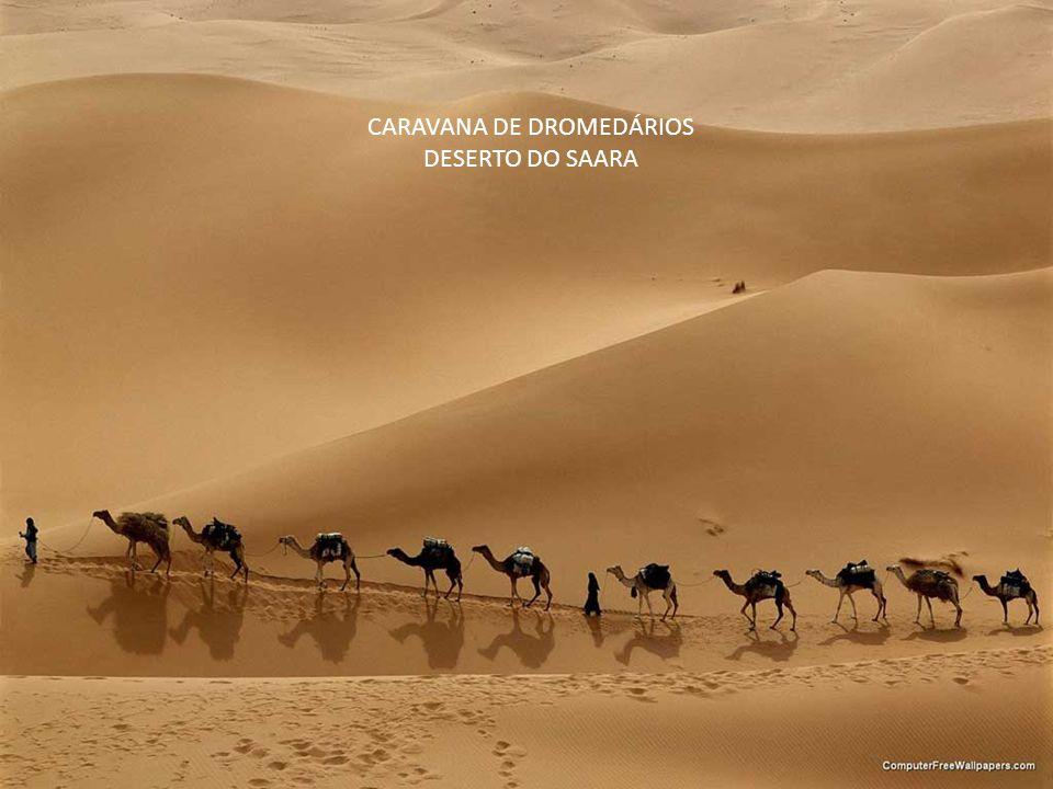 CARAVANA DE DROMEDÁRIOS DESERTO DO SAARA